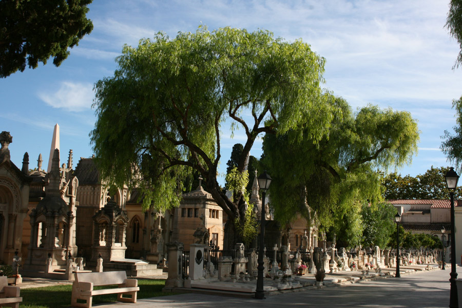 Árbol pasillo central del Cementerio General de Valencia
